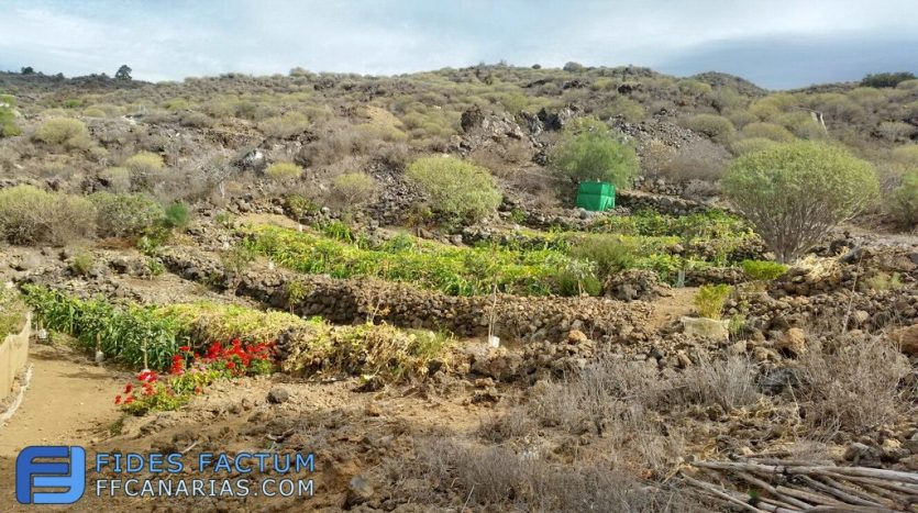 The farm with the house in Alcalá, Guia de Isora, Tenerife